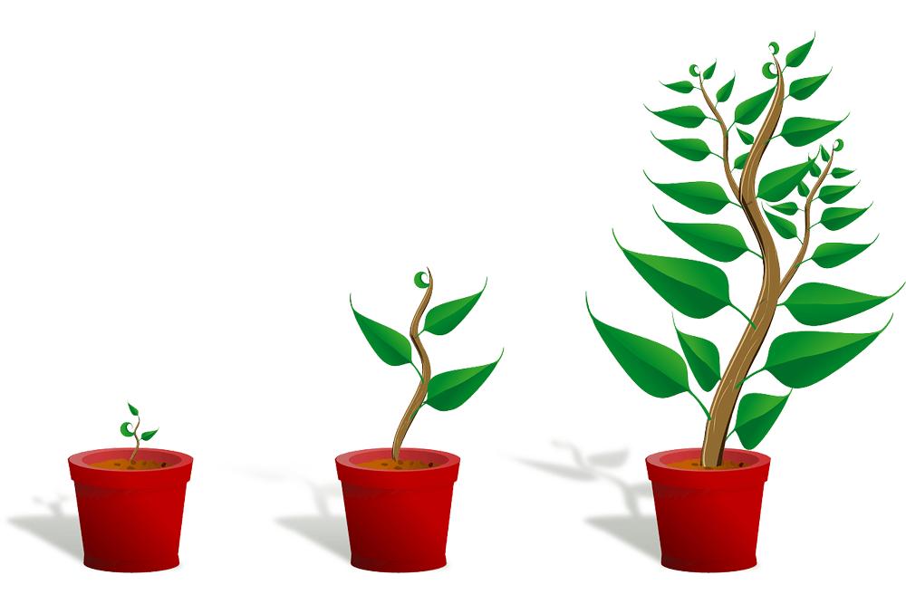 Amazon Dynamic growth